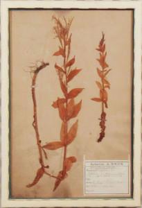 Botanical4
